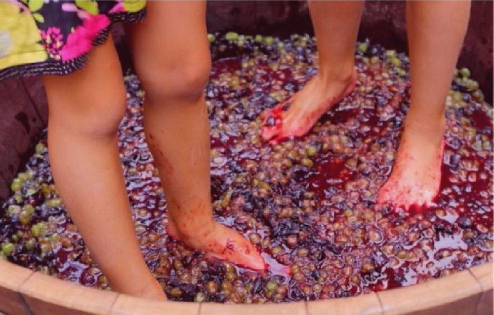 Pigiatura dell'uva e pressatura: differenze